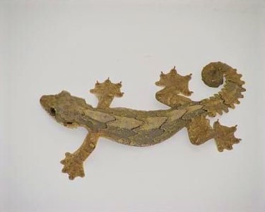 A Flying Gecko