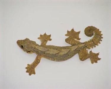 A Flying Gecko